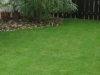 grass-planting-2
