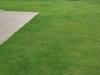 grass-planting-3