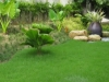 grass-planting-4
