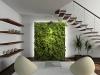 indoor-plant-4