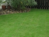 grass-planting-5